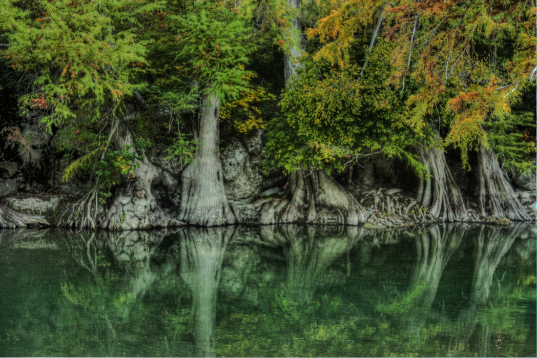 """Guadalupe Trees"", Guadalupe, ""Guadalupe River"", ""New Braunfels"", HDR, river, ""cypress trees"", photography, photograph, photographer"